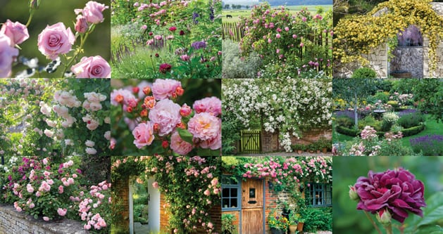 calendar2019_rose03
